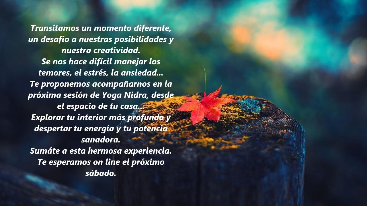 Sesiones de Yoga Nidra online